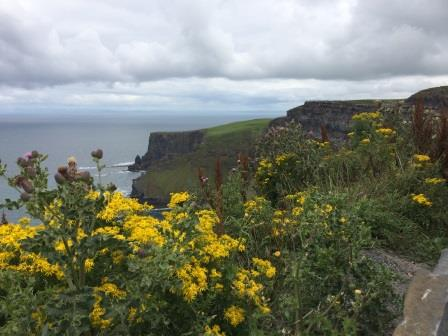 Cliffs of Moher flowers