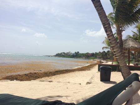 Mexico Sargassum Beach