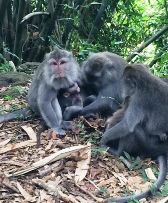 Monkeys nursing