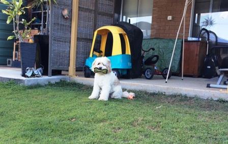 Yuki Dog