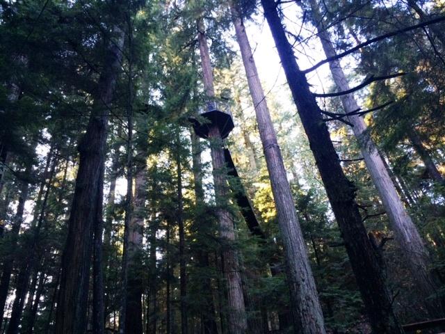 Vancouver - Capilano Bridge Treetops from under