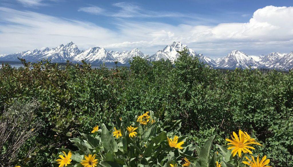 Teton Mountain and flowers